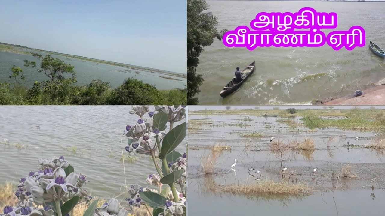wonderful veeranam lake [The town Lalpet] (world food kuwait)